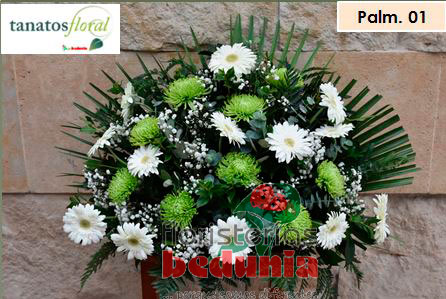 Palma001
