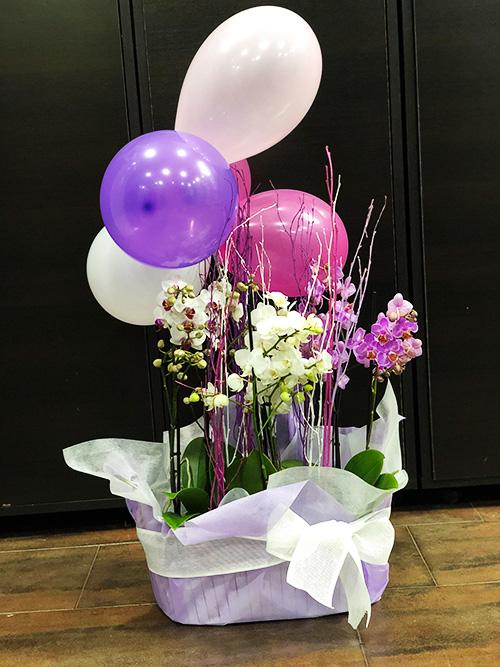 Cesta orquídeas y globos